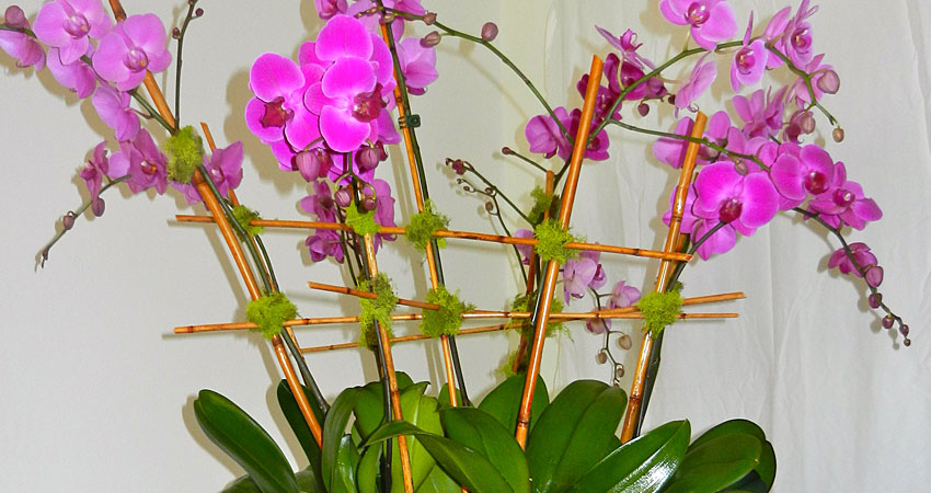 corporate_orchids